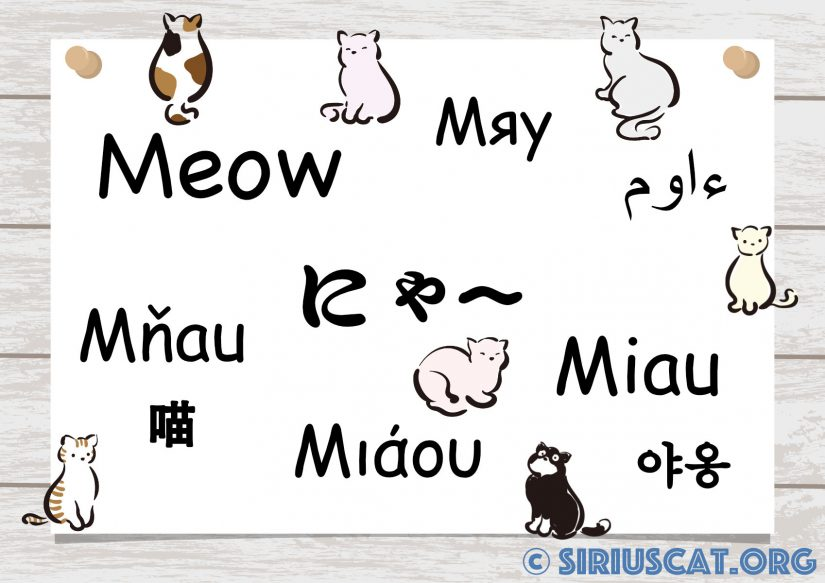Support multilingue(にゃー・MEOW・Miau)